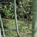 写真: 竹と古沼