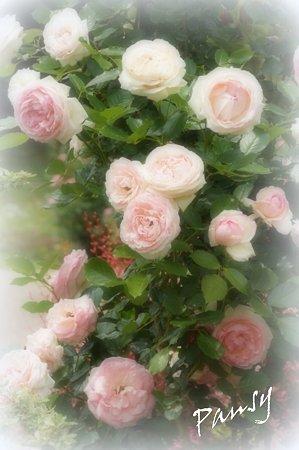 rose garden..10