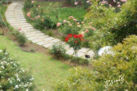 rose garden..25