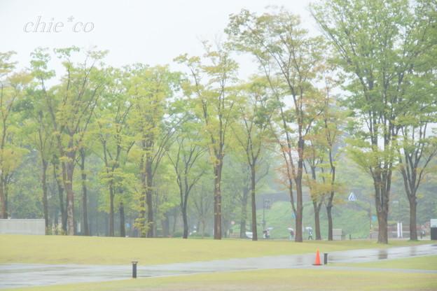 雨にけむる緑の風景・・