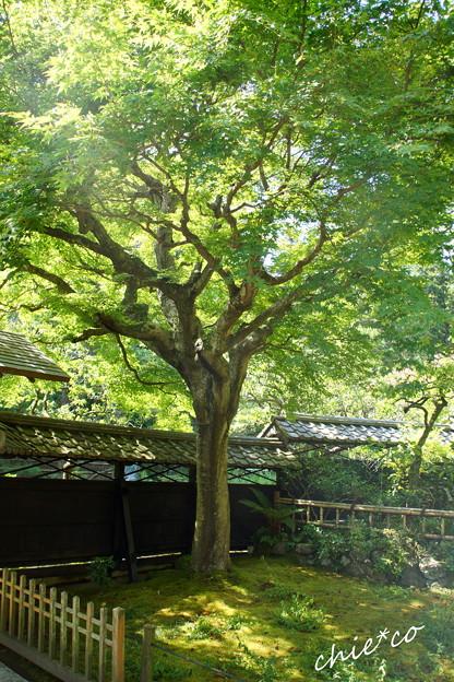 東慶寺-269