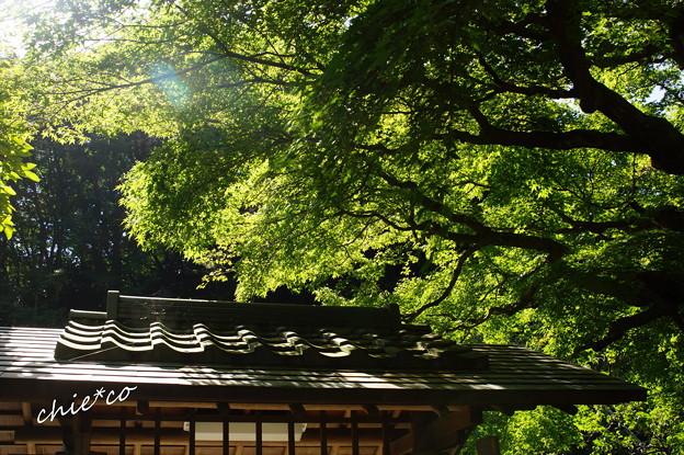 東慶寺-272
