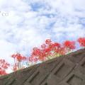 Photos: 日向薬師-305