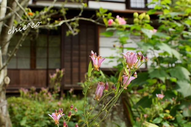 鎌倉-295