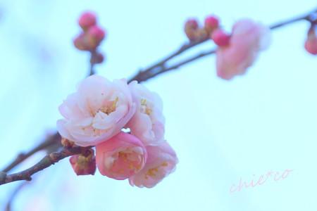 久良岐公園-129