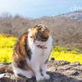 写真: 吾妻山公園-246