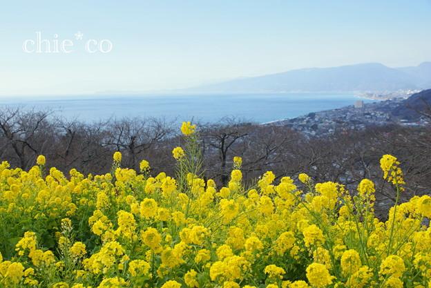 写真: 吾妻山公園-257