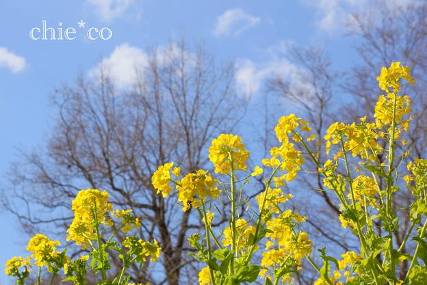 写真: 吾妻山公園-261
