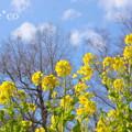 写真: 吾妻山公園-264