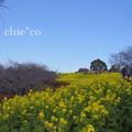 写真: 吾妻山公園-276