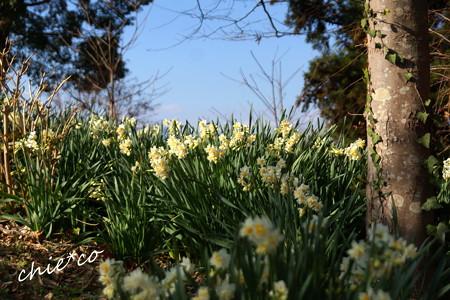 吾妻山公園-311