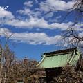 写真: 長谷寺-181