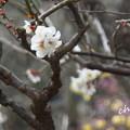 写真: 長谷寺-187
