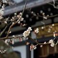 写真: 長谷寺-192