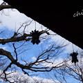 写真: 長谷寺-204