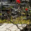 写真: 木瓜【黒光】
