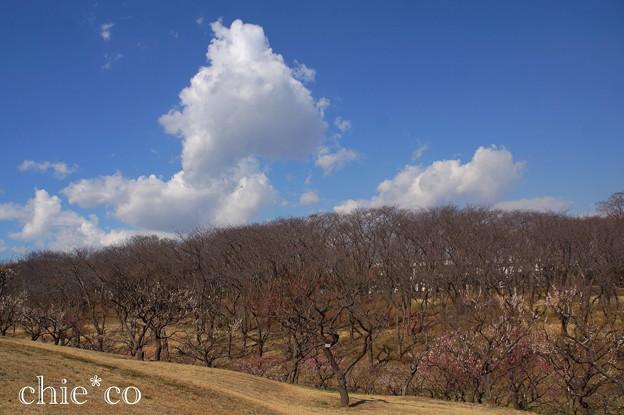 横浜根岸森林公園-138