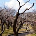 写真: 横浜根岸森林公園-144