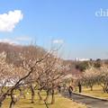 写真: 横浜根岸森林公園-163
