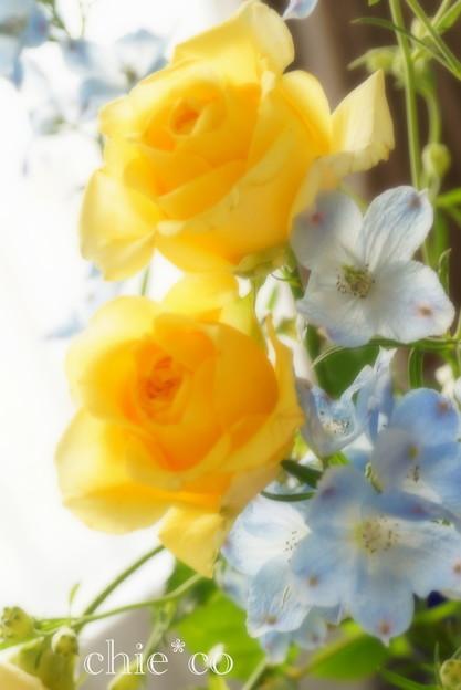 黄色のバラと・・みずいろのデルフィニウム・・