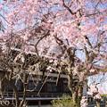 写真: 鎌倉-294