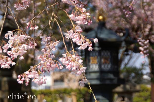 写真: 鎌倉-297