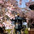 写真: 鎌倉-299