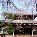 写真: 鎌倉-300