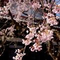 写真: 鎌倉-302