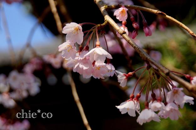 写真: 鎌倉-304