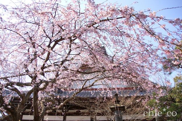 鎌倉-305