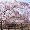 写真: 鎌倉-305