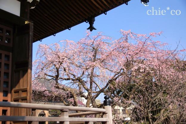 鎌倉-307