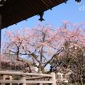 写真: 鎌倉-307