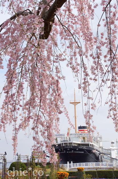 写真: Yokohama-141
