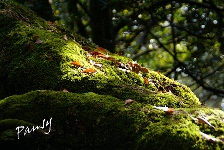 楠木の大樹の根・・