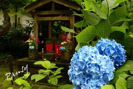 明月院 blue・・3