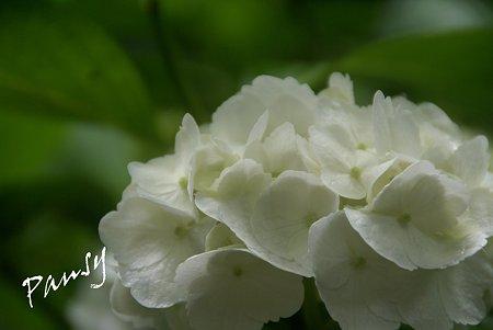 白の魅力・・2