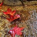 写真: 濡れ紅葉