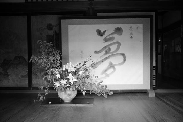 Photos: 夢・