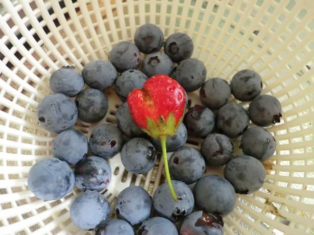 heartberry