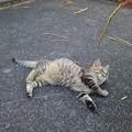 Photos: 公園の子猫5