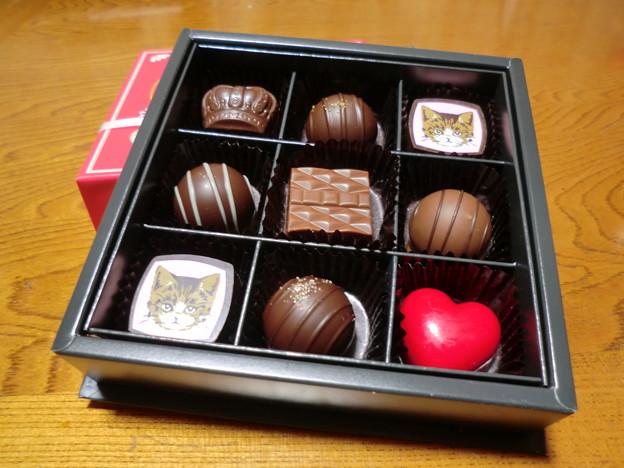 猫チョコ2