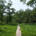 真夏の湿原