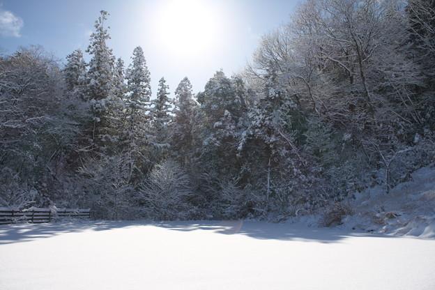 写真: 2017年初雪景色