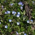 写真: ブルーの輝き