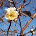 Photos: 八重冬至@鹿嶋神社鳥居1701100022