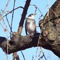 Photos: 1701220036鳥