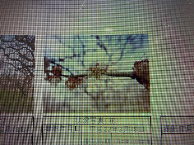 酈懸梅B5-026 1703040024