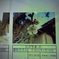 Photos: 酈懸梅D1-149 1703050036
